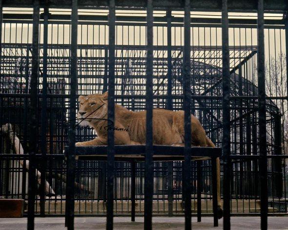 London-Zoo-Circa-1970-6