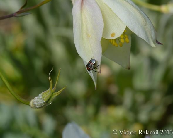 Bug Battling Flower