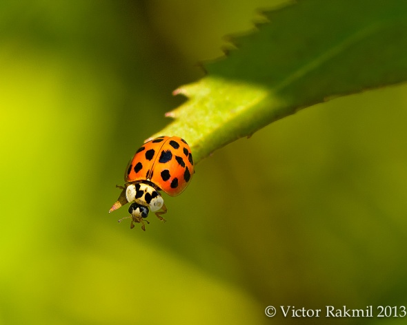 Why Take -Lady Bug on the edge