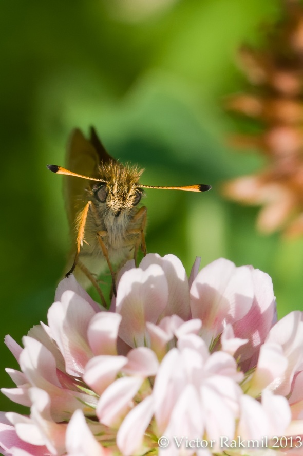 Bug for extesnion Tubes