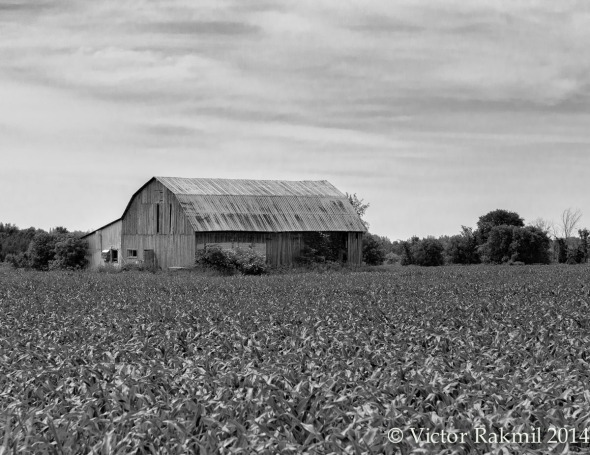Farmland in Blackand White