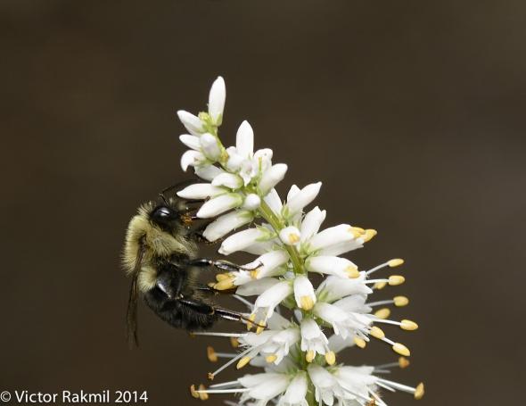 Classic Bee