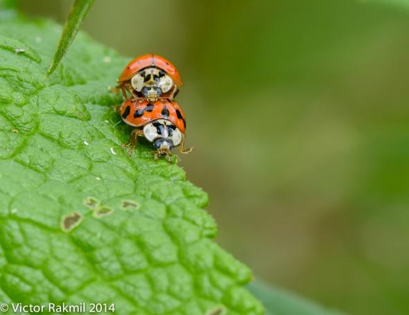 Love Bugs-1
