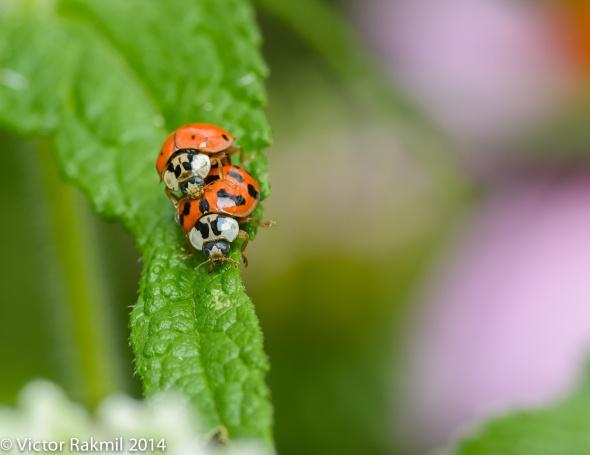Love Bugs-2