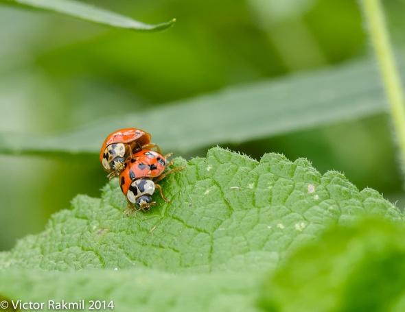 Love Bugs-3