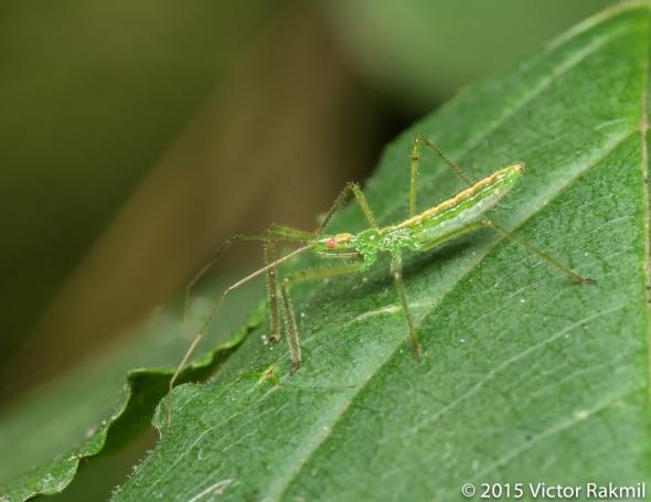 Assasin Bug and Fly