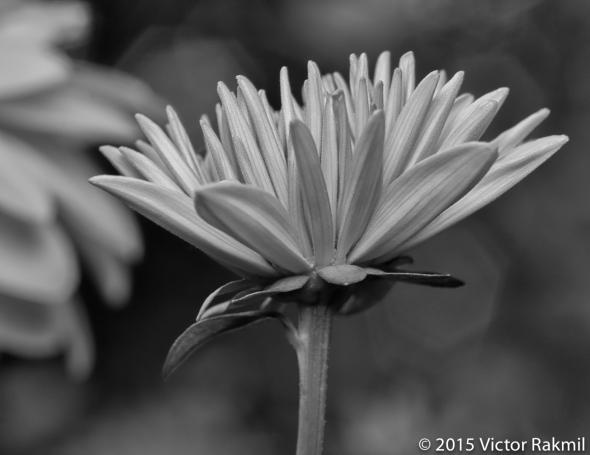 Flower Power-3