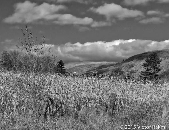 Landscape Tests-2