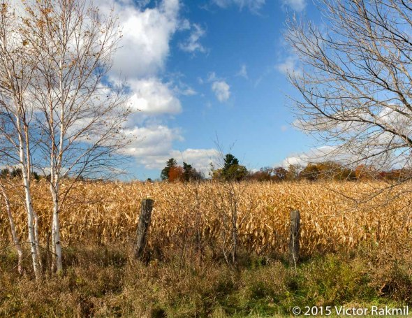 Landscape Tests-3