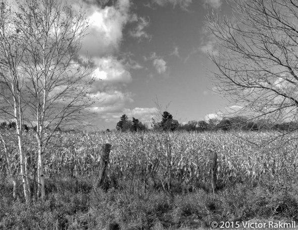 Landscape Tests-4