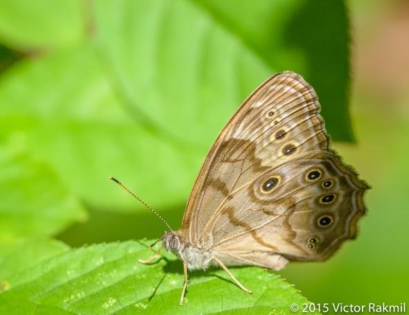 Butterrfly