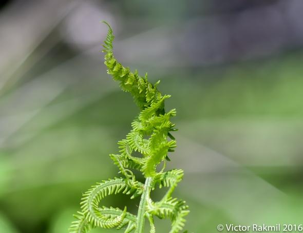 Ferns 2-2