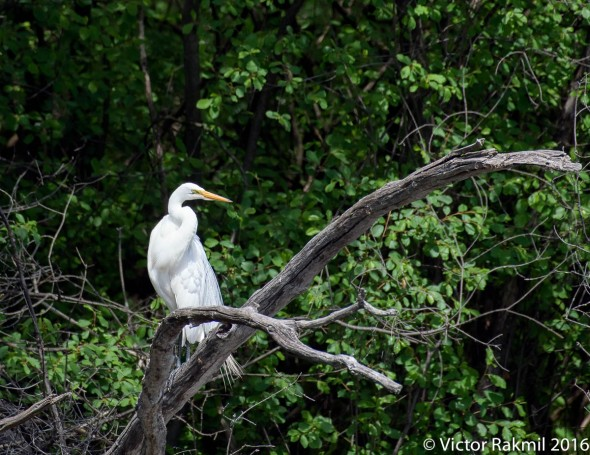 egret-2-3