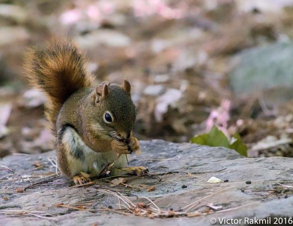 squirrels-2