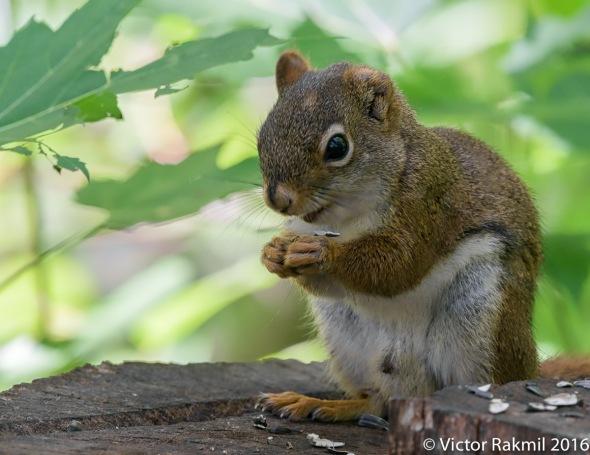 squirrels-5