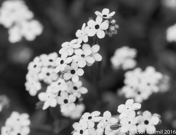 blue-flowers-6