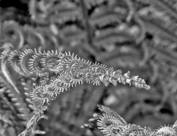 natural-abstraction-2
