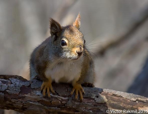 squirrels-3
