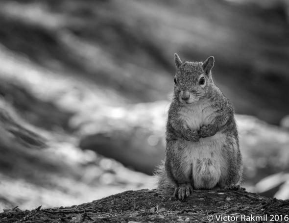squirrels-4
