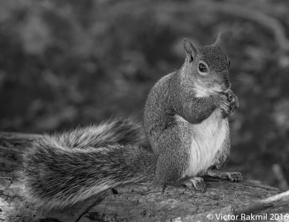 squirrrel-3