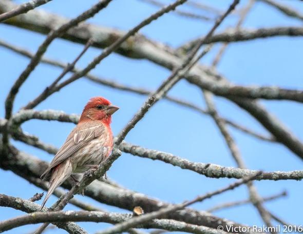 misc-birds-5