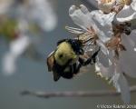 Bees, while we still havethem-2