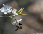 Bees, while we still havethem-3