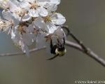 Bees, while we still havethem