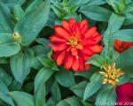 Processed Flowers