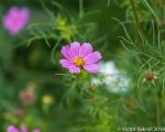Curbside Flowers-2