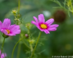 Curbside Flowers-3