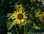 flowers in the spotlight-2