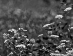 Abstract Flora-2