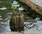 Tree Stump-3
