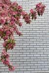 Wallflower-3