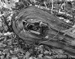 Logs in Fall-2