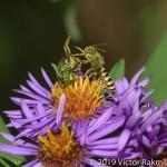 BEE Fight-2