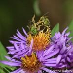 BEE Fight-3
