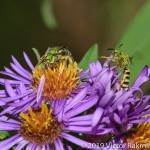 BEE Fight