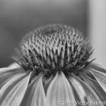 Up Close-2