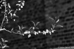 Flower-4-2